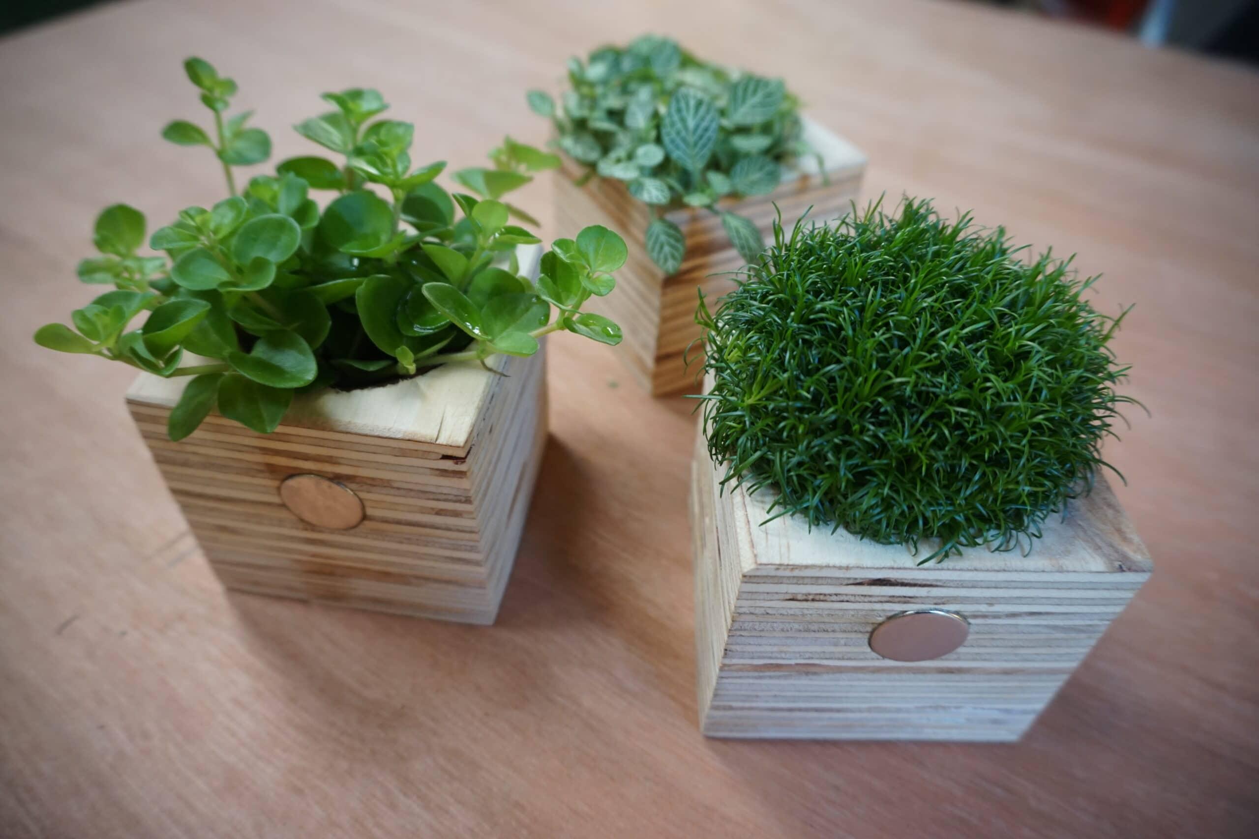 Magnetische plantenbakjes